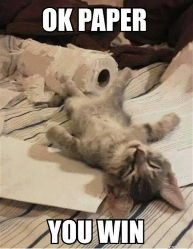 funny cat pictures paper win