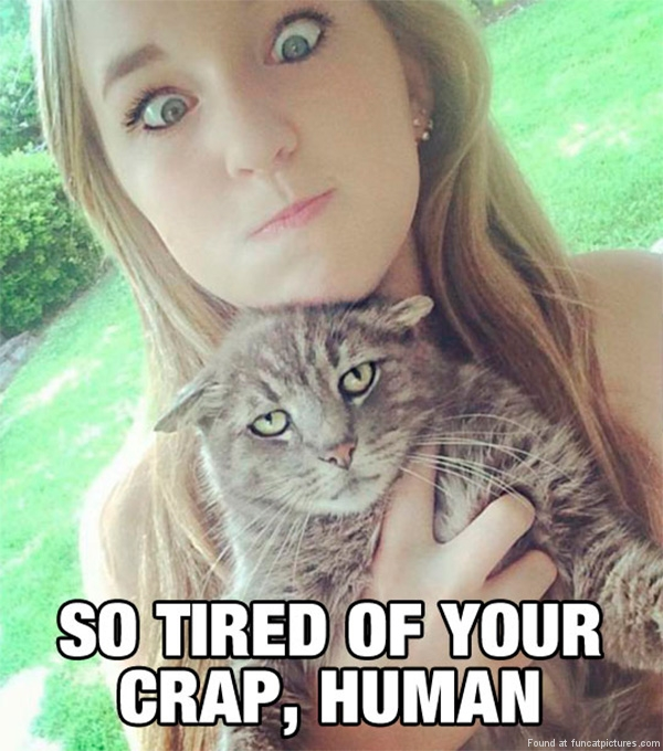 funny-cat-pictures-tired-of-your-crap-human
