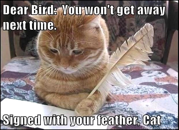 funny-cat-pictures-dear-bird-you-wont-get-away-next-time