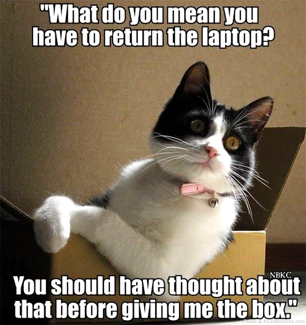 funny-cat-pictures-have-to-return-the-laptop