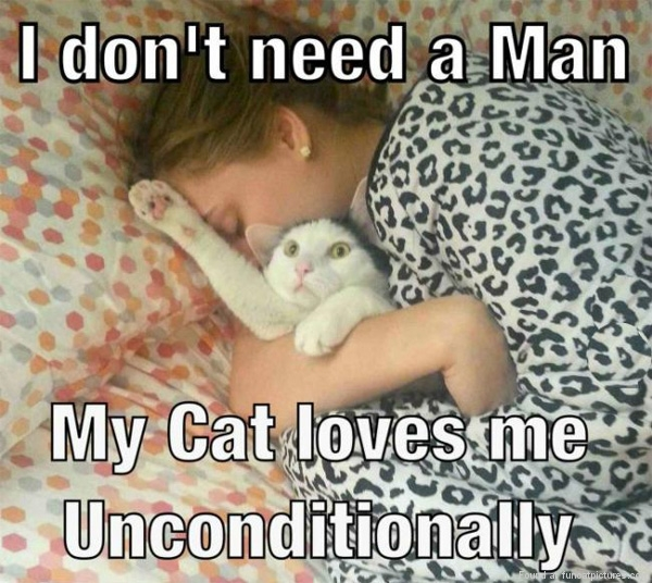 funny-cat-pictures-i-dont-need-a-man
