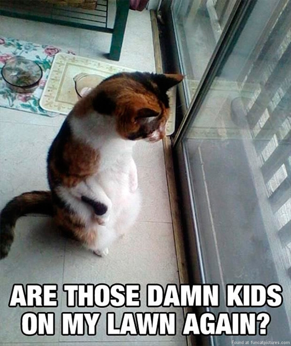 funny-cat-pictures-kids-on-my-lawn-again