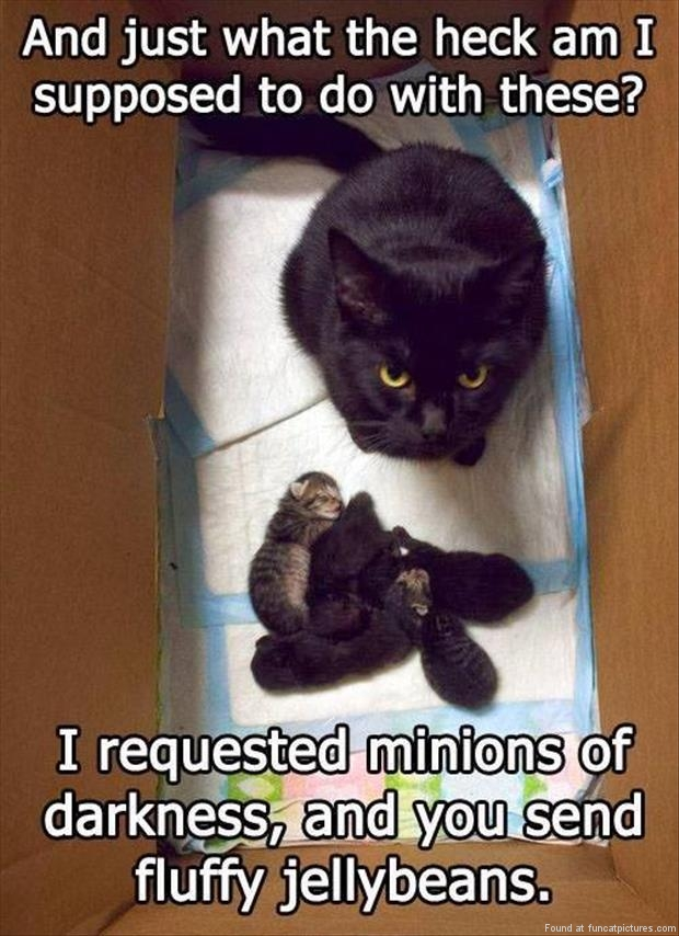 funny cat pictures minions of darknes
