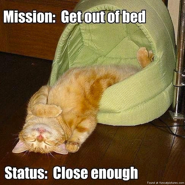 funny-cat-pictures-mission-get-out-of-bed