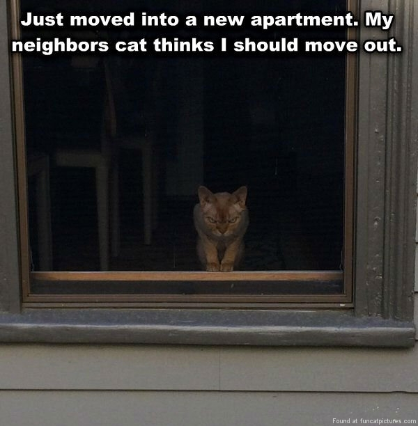 funny-cat-pictures-my-neighbors-cat-think-i-should-move-out