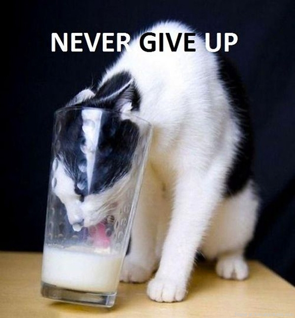 funny-cat-pictures-never-give-up