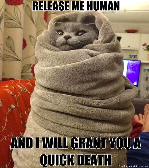 funny-cat-pictures-release-me-human-cat-in-a-towel