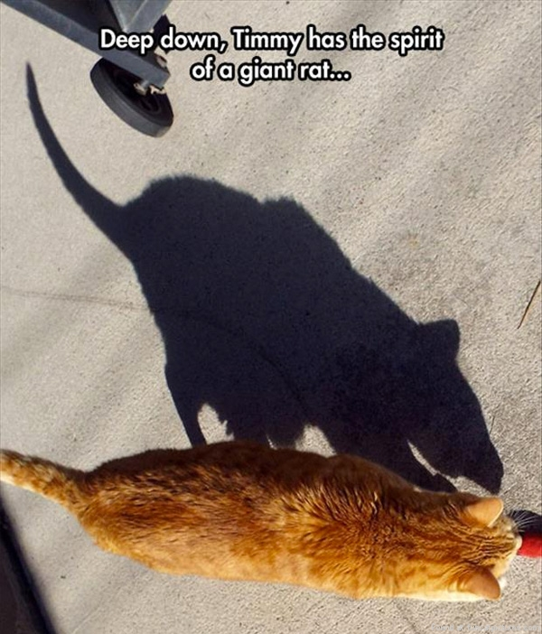 funny-cat-pictures-spirit-of-a-giant-rat