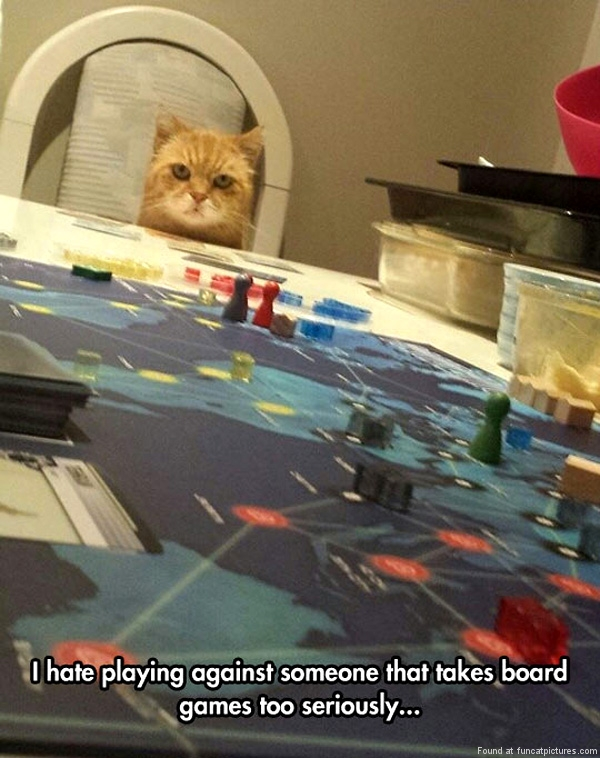 funny-cat-pictures-taking-board-games-to-seriously