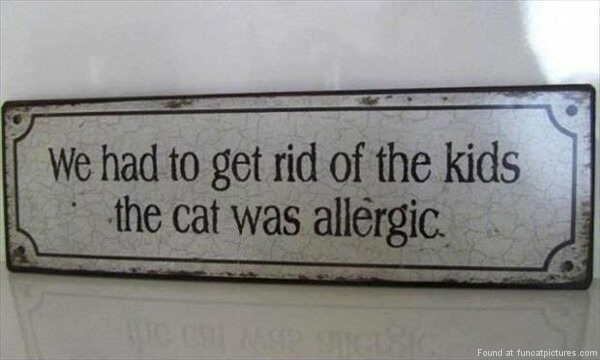 funny-cat-pictures-the-cat-was-allergic