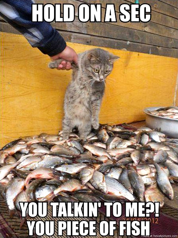 funny-cat-pictures-you-talking-to-me-you-piece-of-fish