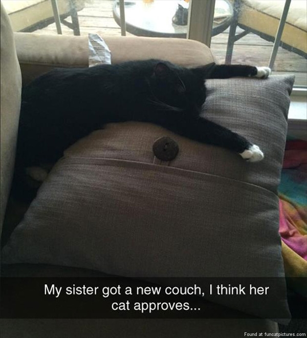 funny-cat-pictures-cat-approves-of-new-couch