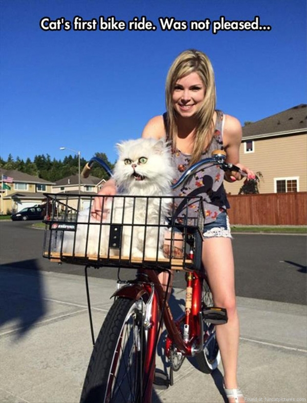 funny-cat-pictures-first-bike-ride