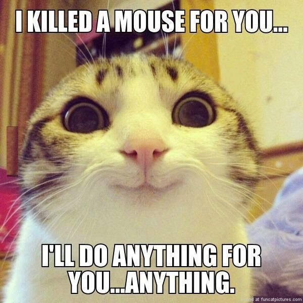 funny-cat-pictures-overly-attached-kitty
