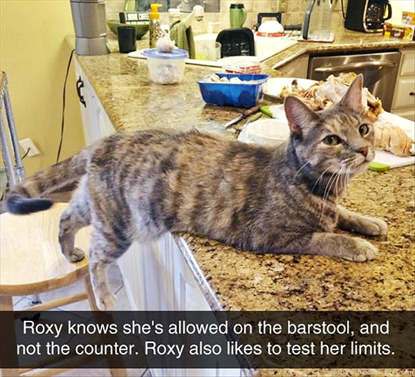 funny-cat-pictures-roxy-test-limits