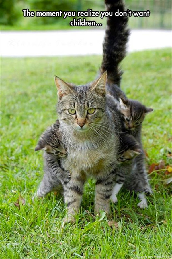 funny-cat-pictures-the-moment-you-realize-you-dont-want-children