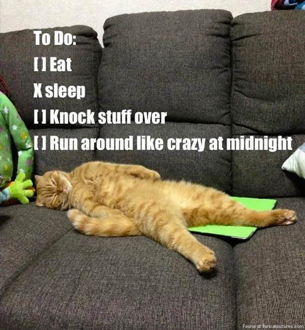 funny-cat-pictrues-to-do-list