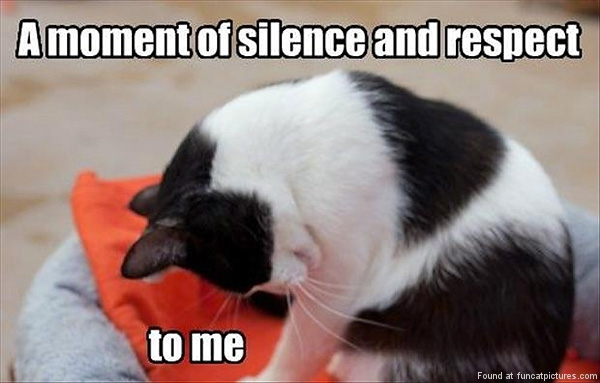 funny-cat-pictures-a-moment-of-silence-and-respect
