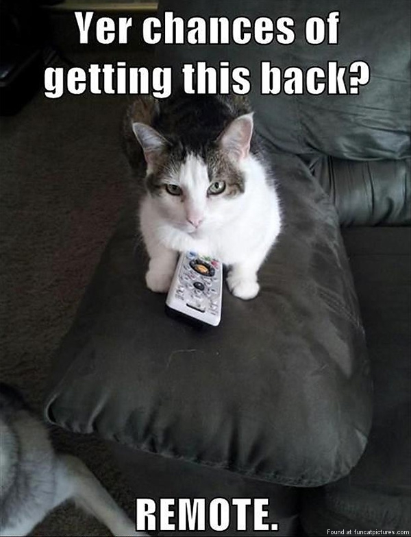 funny-cat-pictures-chances-of-getting-the-remote-back