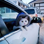 Cat shows the face of anxiousness