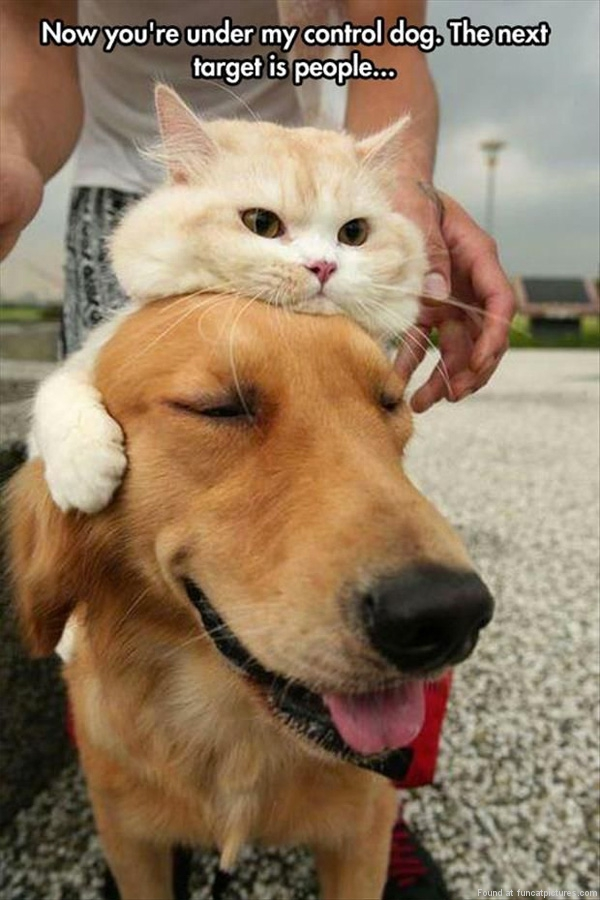 funny-cat-pictures-dog-under-cats-control