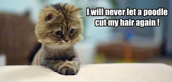 Funny Quotes About Haircuts: Fun Cat Pictures
