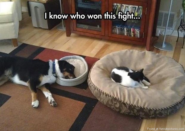 funny-cat-pictures-i-know-who-won-this-fight
