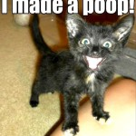 Cat made a poop!