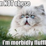 This is not a fat cat