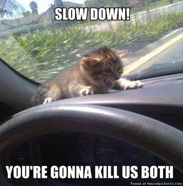 funny-cat-pictures-slow-down