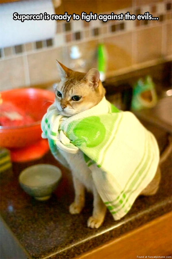 funny-cat-pictures-supercat-is-ready