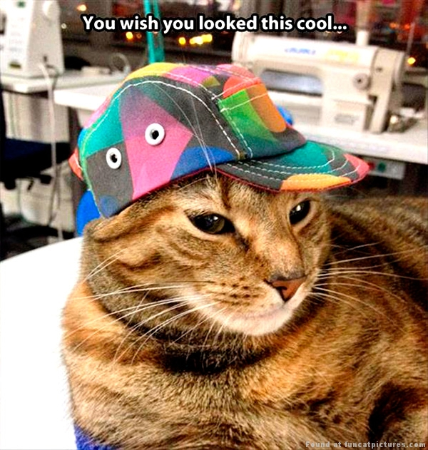 funny-cat-pictures-you-wish-you-looked-this-cool