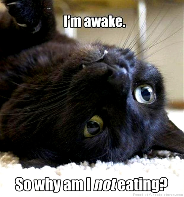 funny-cat-pictures-awake-not-eating