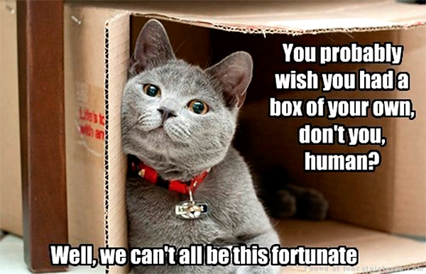 funny-cat-pictures-cat-dont-want-to-share