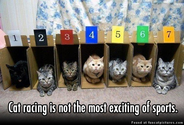 funny-cat-pictures-cat-racing
