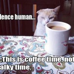 Cat with appreciation for coffee