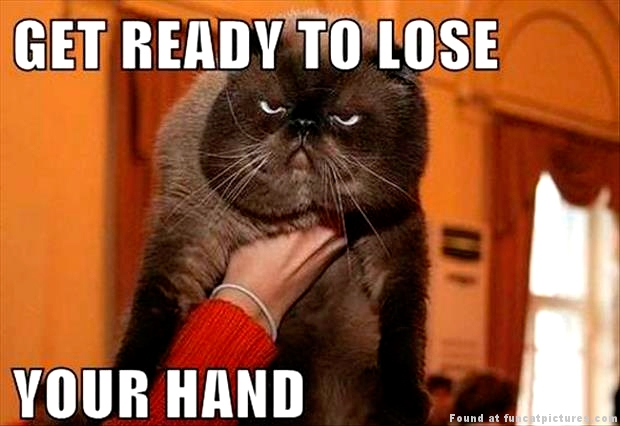 funny-cat-pictures-get-ready-to-loose-your-hand