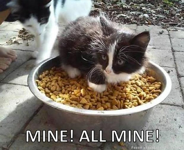 funny-cat-pictures-kitten-claims-food