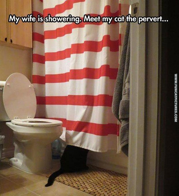 funny-cat-pictures-my-cat-is-a-pervert