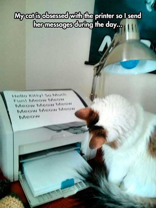 funny-cat-pictures-my-cat-is-obsessed-with-the-printer