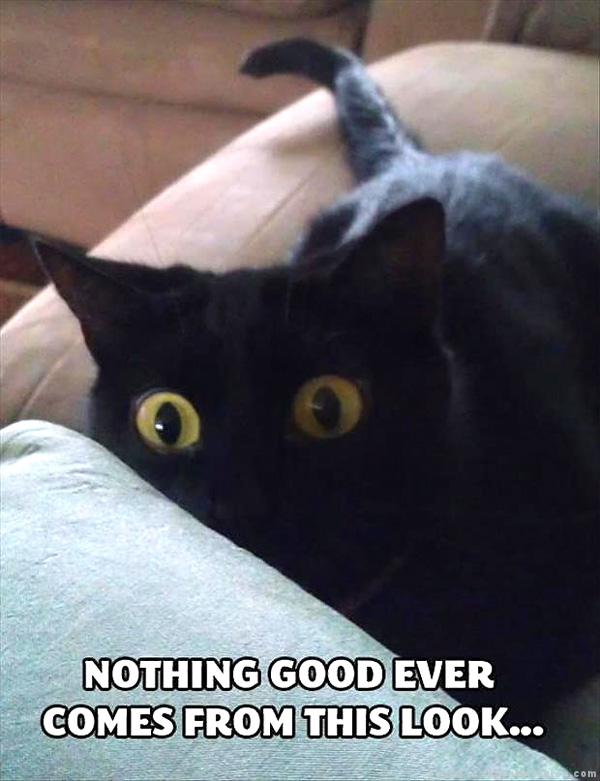 funny-cat-pictures-nothing-good-from-this-look