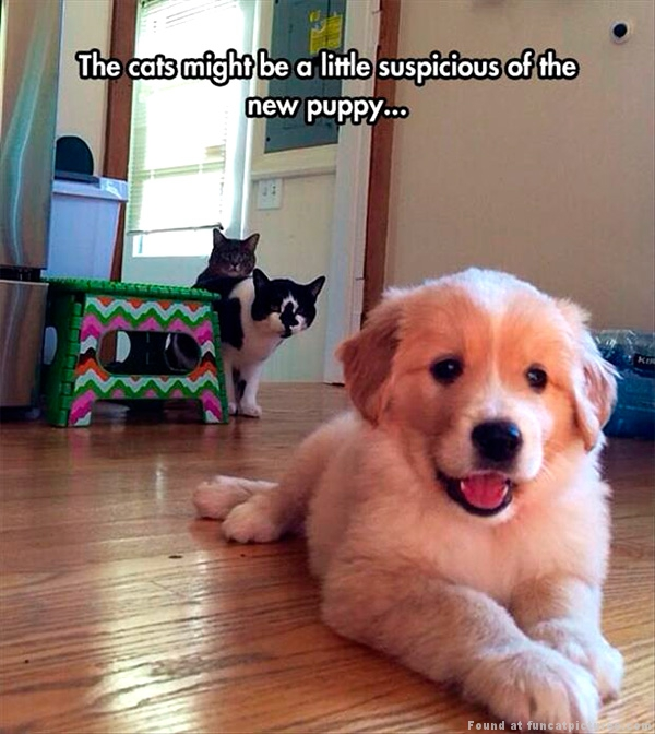 funny-cat-pictures-suspicious-about-new-puppy