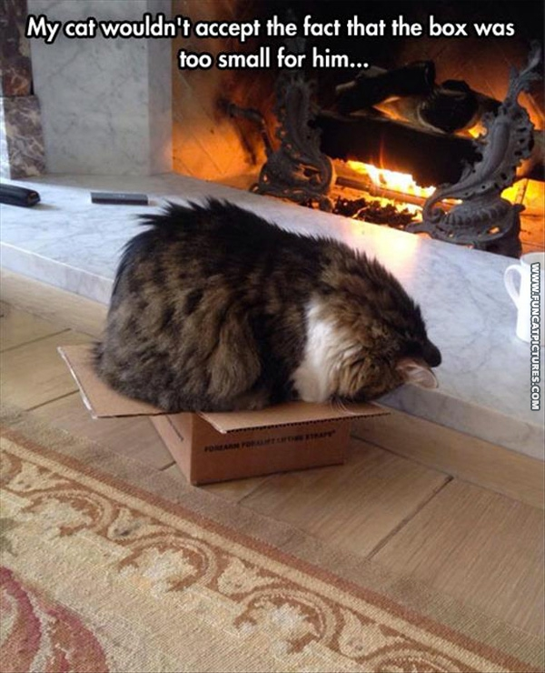 funny-cat-pictures-tiny-box-in-front-of-fire
