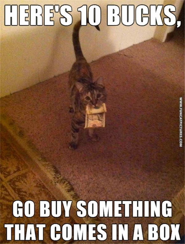 Money Funny Cat What Cats Would do With Money