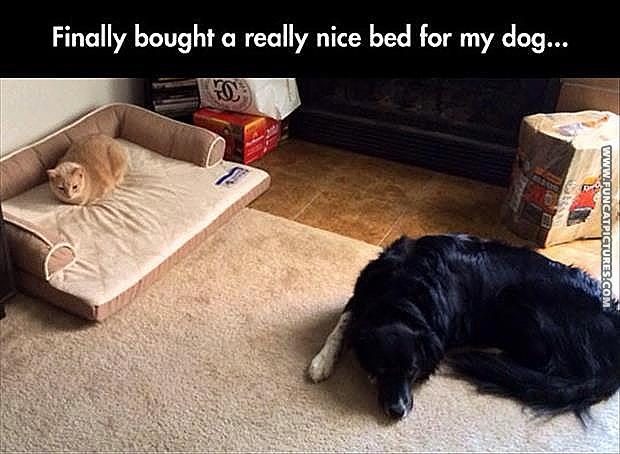 funny-cat-pictures-bougth-my-daog-a-nice-bed