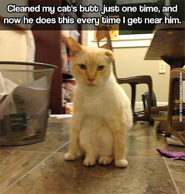 funny-cat-pictures-cleaned-my-cats-butt