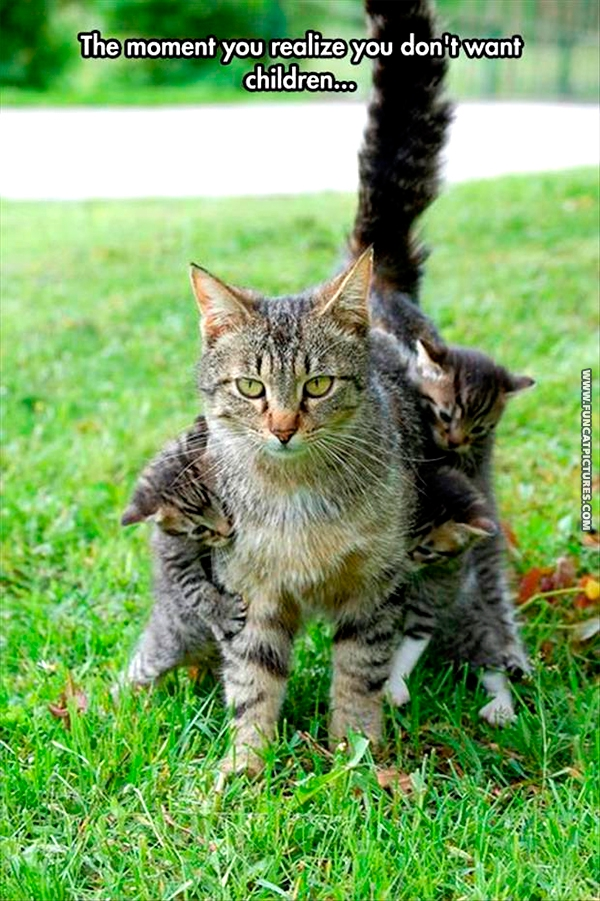 funny-cat-pictures-dont-want-children