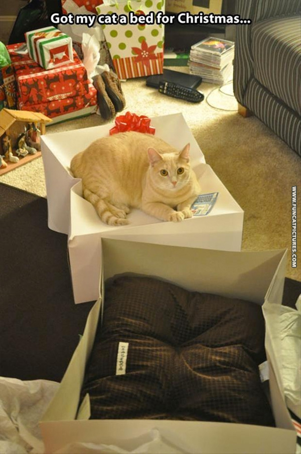 funny-cat-pictures-got-my-cat-a-bed-for-christmas