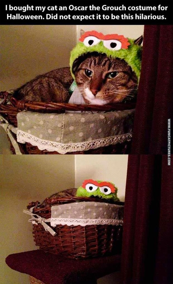 cat in oscar the grouch costume - Funny Cat Halloween
