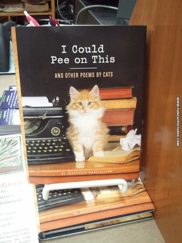 funny cat pictures i could pee on this